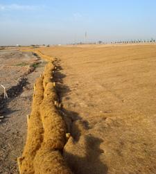 Bioingeniería del suelo