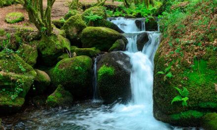 Día de las Reservas Naturales Fluviales
