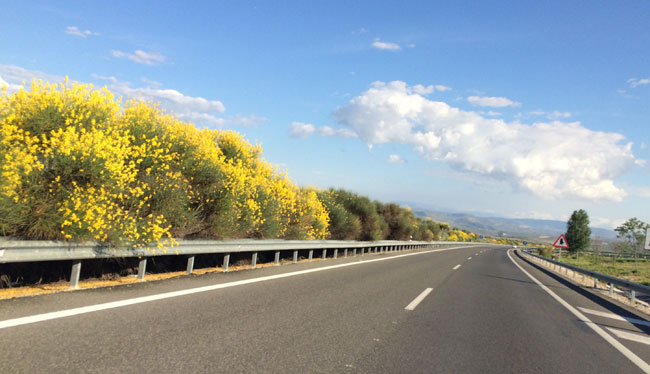 Funcionalidad de la vegetación en el entorno de la carretera