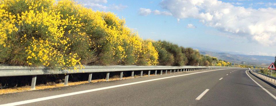 Jornada sobre la funcionalidad de la vegetación en el entorno de la carretera