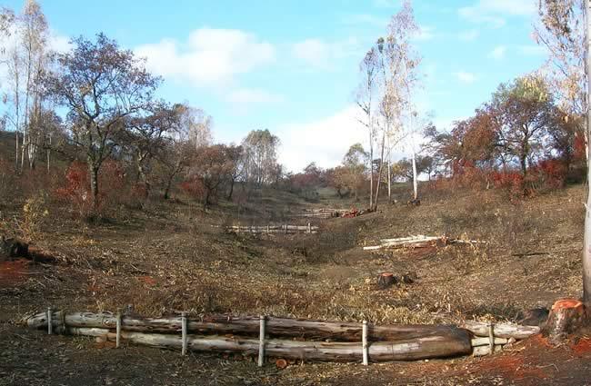 Recuperación de terrenos degradados por los incendios