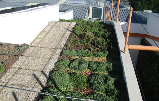 Cubiertas verdes en edificios