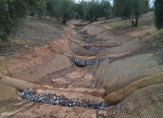 Reparación y estabilización de cárcavas en olivares