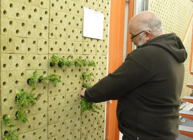 Jardin vertical restauraci n paisaj stica paisajes del for Techos y paredes verdes