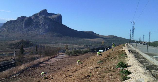 Hidrosiembras y plantaciones en una línea de AVE