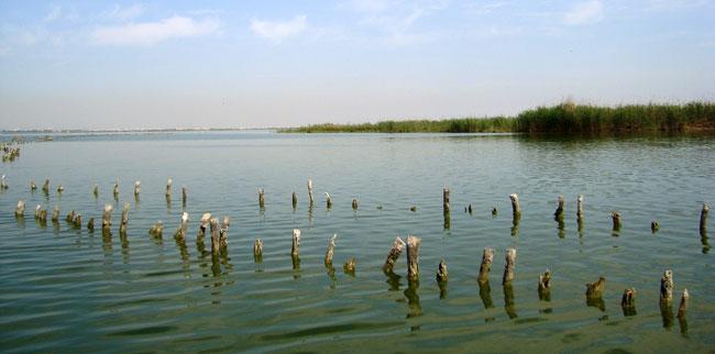 Restauración ecológica de humedales