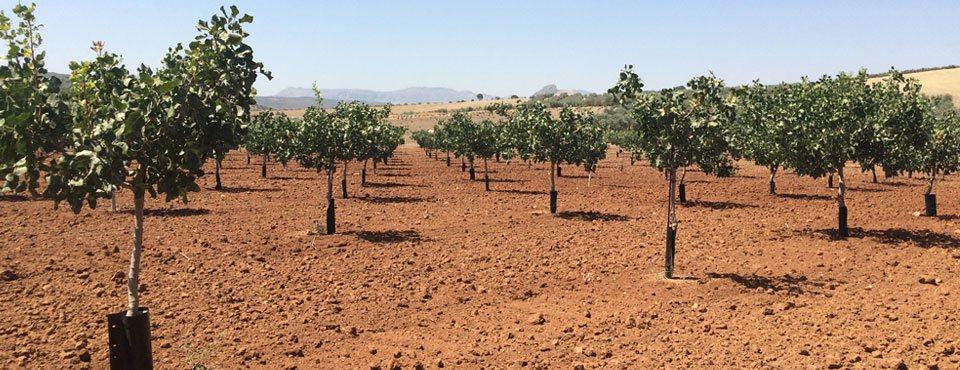Plantaciones agrícolas