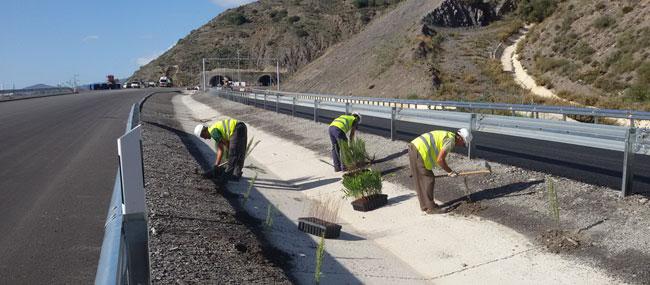 Plantación en medianas, taludes y márgenes de autovía