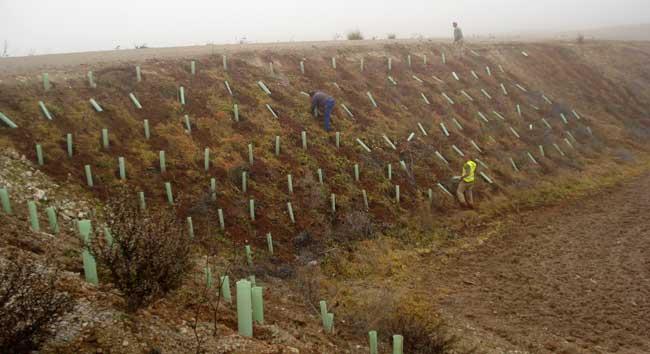 Restauración ambiental con plantaciones