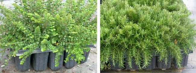 Mejor vegetación en bandejas forestales