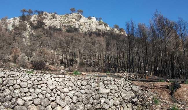 Recuperación medioambiental tras el incendio