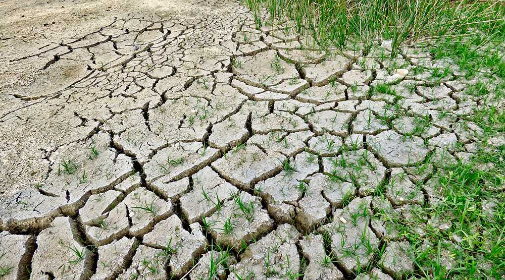 Sequía en campos agrícolas