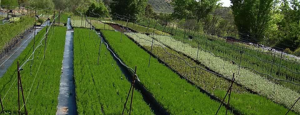 Vivero productor de plantas de alta resistencia