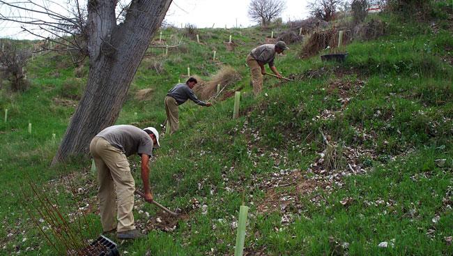 Vivero de planta para restauración paisajística